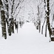 Lane in winter park — Stock Photo #4566359
