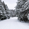 Winter landscape — Stock Photo #4566386