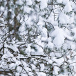 Winter branches — Stock Photo #4566387