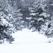 Winter landscape — Stock Photo #4566412