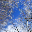 Winter trees and blue sky - Stock Photo