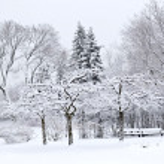 Winter park landscape — Stock Photo #4566551