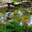 Pond in zen garden — Stock Photo #4566604