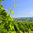 Royalty-Free Stock Photo: Landscape with vineyard