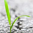 Grass growing from crack in asphalt — Stock Photo