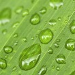 Stock Photo: green leaf background with raindrops