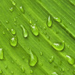 Green leaf background with raindrops — Stock Photo
