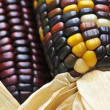 Indian corn — Foto Stock