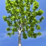 Green tree — Stock Photo #4569633