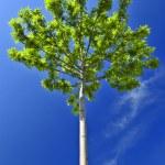 Green tree — Stock Photo #4569634