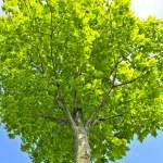 Green tree — Stock Photo #4569639