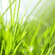 Stock Photo: green grass background