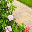 Stockfoto: Path in blooming garden