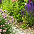 Path in blooming garden — Stock Photo #4569725