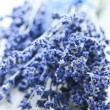 Dried lavender — Stockfoto