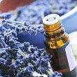 Stock Photo: Lavender herb and essential oil