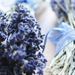 Dried lavender - Stockfoto