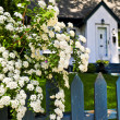 Blue fence with white flowers — Stock Photo #4569959