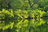 Green reflections in water — Stock Photo