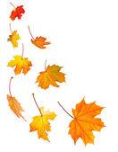 Düşen akçaağaç yaprakları arka plan — Stok fotoğraf
