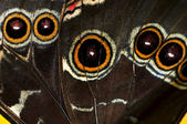 Butterfly wing — Stock Photo