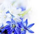 Jarní květy pozadí — Stock fotografie