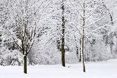 Winter park krajina — Stock fotografie
