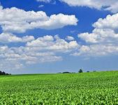 Landschaft im ländlichen raum — Stockfoto