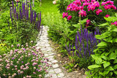 Path in blooming garden — Stock Photo