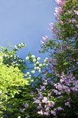 Fundo da flor — Fotografia Stock
