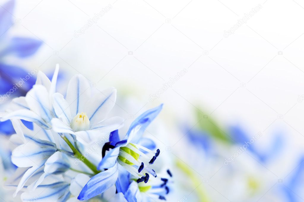 Floral background of first spring flowers close up — 图库照片 #4566202