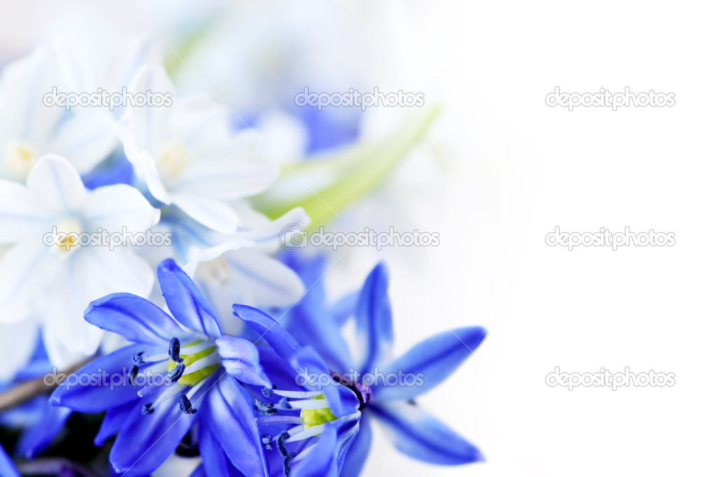 Floral background of first spring flowers close up  Stock Photo #4566205