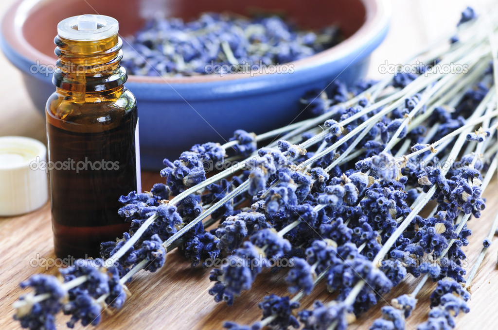 Dried lavender herb and essential aromatherapy oil  Stock Photo #4569780