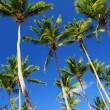 Palms on blue sky — Stock Photo
