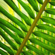 Tropical leaf — Stock Photo #4635559