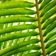 Tropical leaf — Foto Stock