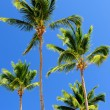 Palms on blue sky background - Stockfoto