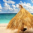 Tropical beach - Stock fotografie