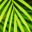 Palm tree leaves — Stock fotografie