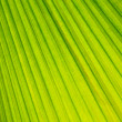 Royalty-Free Stock Photo: Palm tree leaf background