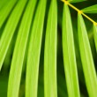 Palm tree leaves — Stock Photo #4635785