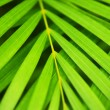 Palm tree leaves — Stok fotoğraf