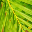Palm tree leaves — Stock Photo #4635791