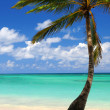 Beach of a tropical island — Foto Stock