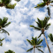 Palm trees — Stock Photo #4636211