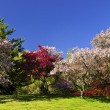 Blooming fruit trees in spring park — Stock Photo