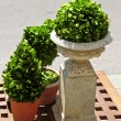 Potted green plants — Stock Photo