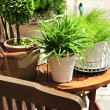 Stock Photo: Potted green plants