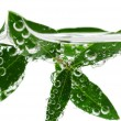 Green leaves in water — Foto de Stock