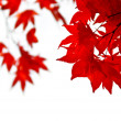 Fall leaves background — Stockfoto